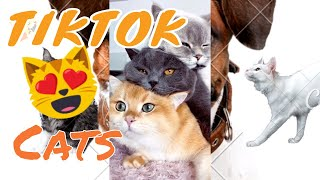 Cats Of TikTok Compilation | Cute Cats | Funny Cats | Part One
