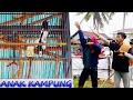 "download lagu SUARA JERITAN BURUNG KACER : ""Anak Kampung"" Kacer Juara di LatBer Launching Mandau BC gratis"