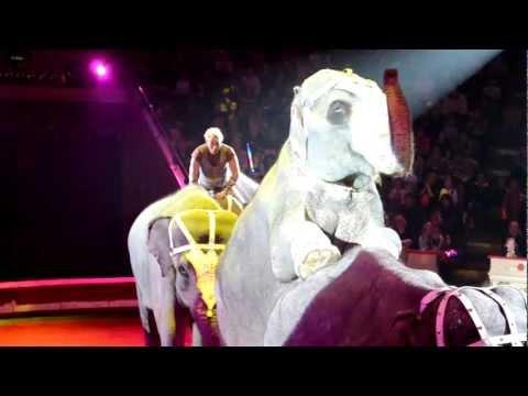 выступление слонов на цветном