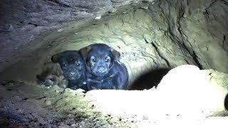 😭 7 unbelievable dog rescues