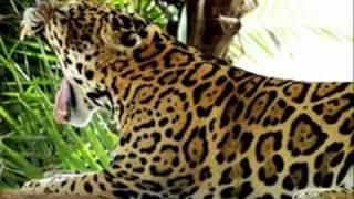 Vídeo 26 de Lourenço e Lourival