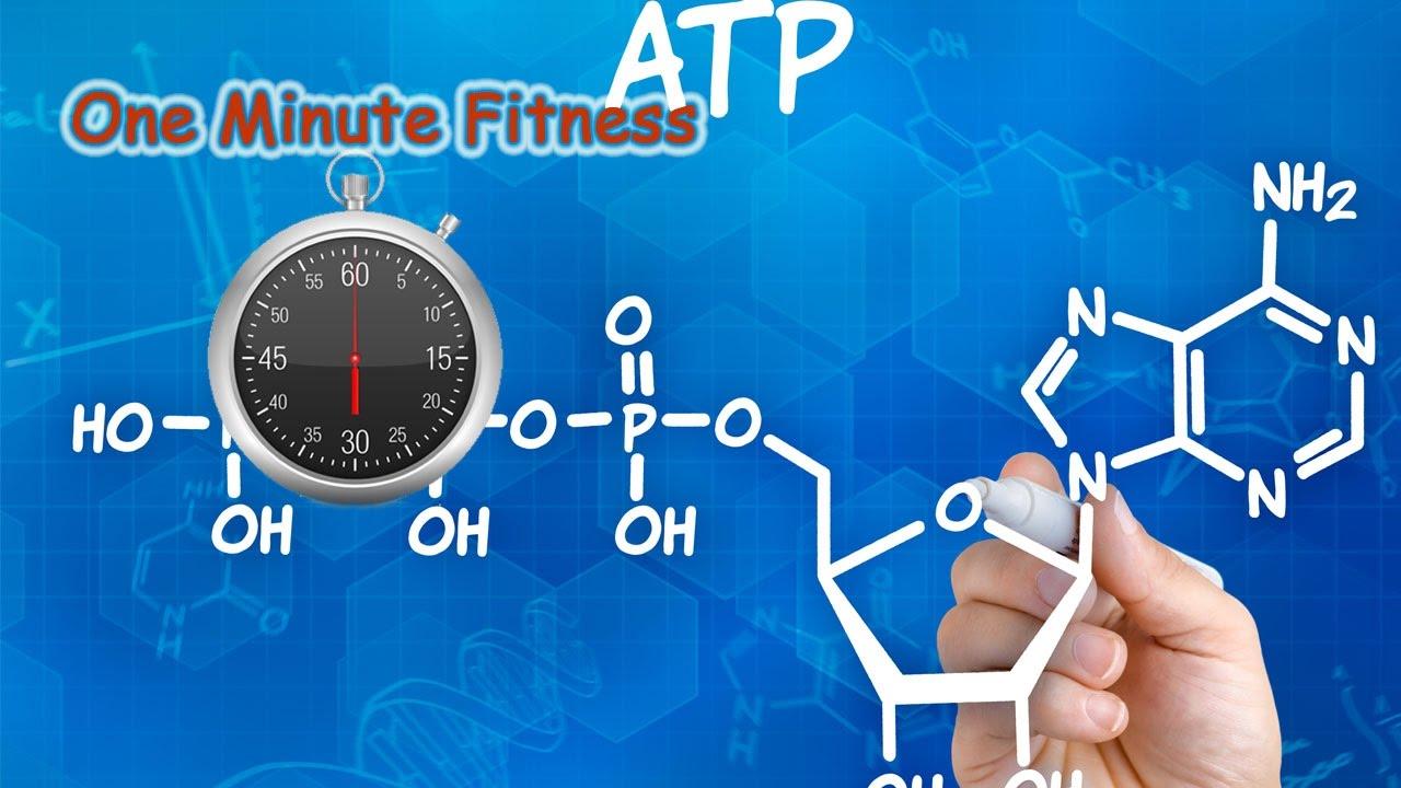 L'ATP e i sistemi energetici