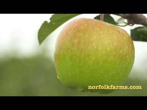 Apple Orchard in Norfolk County