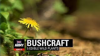 5 Edible Wild Plants - Bushcraft | How To | British Army