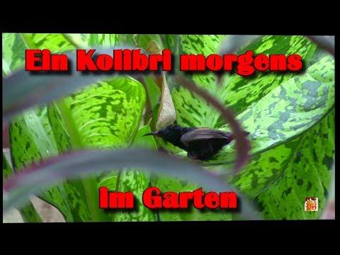 Ein Kolibri im Garten