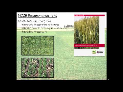 Soil Fertility Management for Organic Wheat Production