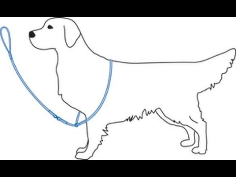 Ринговка для собаки своими руками