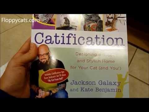Cute kitten jackson galaxy how to save money and do it for Jackson galaxy ground prey wand
