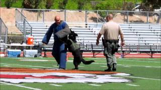 Riverside Police and Riverside Sheriff Departments K9 Halftime Show.