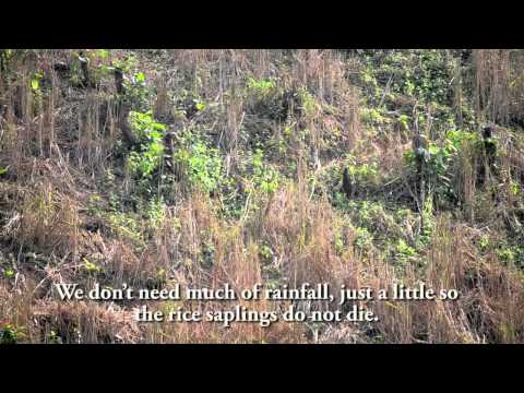 Jhum farming and climate change