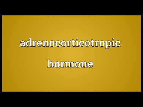Header of adrenocorticotropic hormone