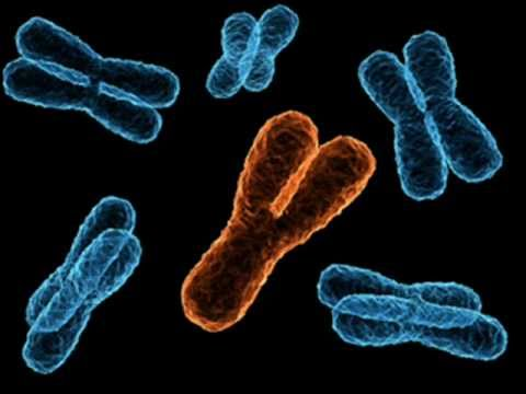 Y CHROMOSOME HEART , HEALTH EDUCATION , INFECTION CONTROL (ICSP) , URDU / HINDI