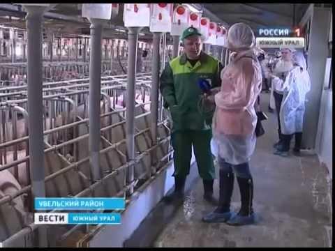 Челябинская область. Агрохолдинг ''Ариант''. Пуск Березовской свинофермы. Январь 2015