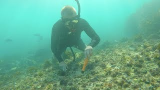 BIGGEST GOLD NUGGET RINGS FOUND CASH 💰 UNDERWATER METAL DETECTING (OCEAN TREASURE)