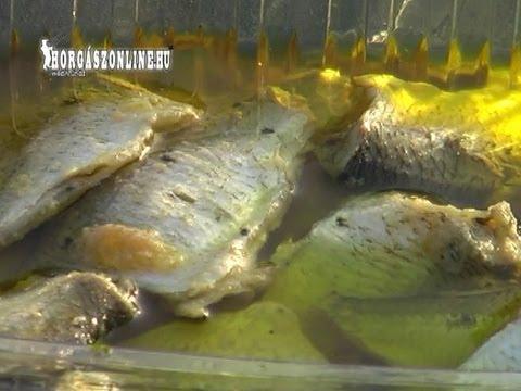 Olajos hal készítése házilag