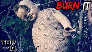 Top 10 Scary Wasp Nests That Need To Be Destroyed - Part 2