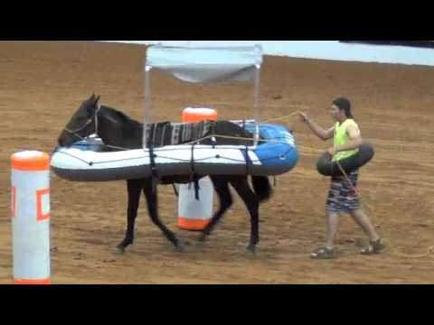 2012 Supreme Extreme Mustang Makeover Youth Freestyle Finals