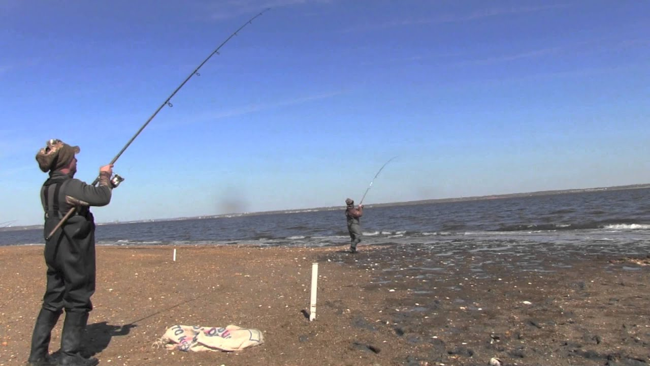 Agony outdoors how to surf fishing sandy hook new jersey for Ibsp fishing report