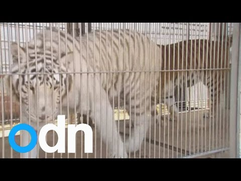 Thousands of retired circus animals in limbo in Mexico