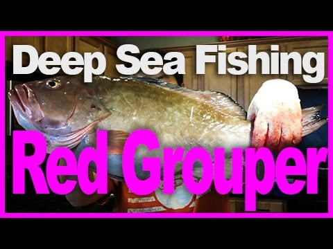 Download deep sea fishing 01 tampa florida mar 09 for Tampa deep sea fishing