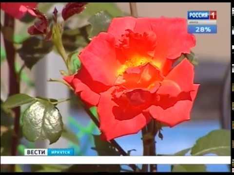 Выпуск «Вести-Иркутск»20.08.2018 (18:40)