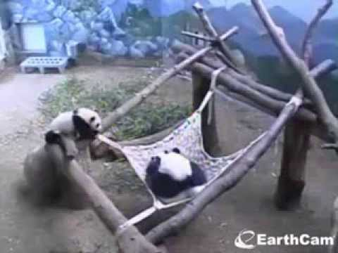 2014-02-26 Lun Lun & Cubs: Girls Gone Wild