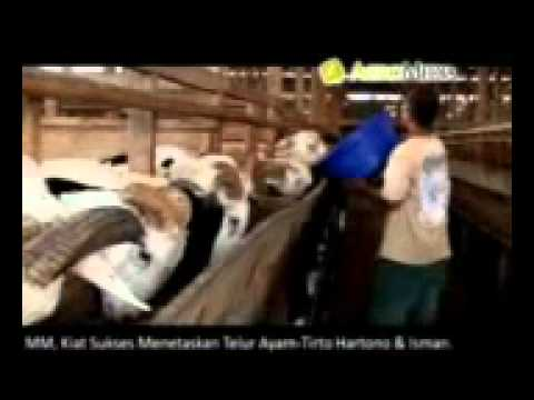 Buku Pintar Beternak & Bisnis Domba video