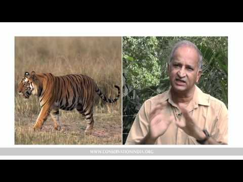 The Science of Counting Tigers