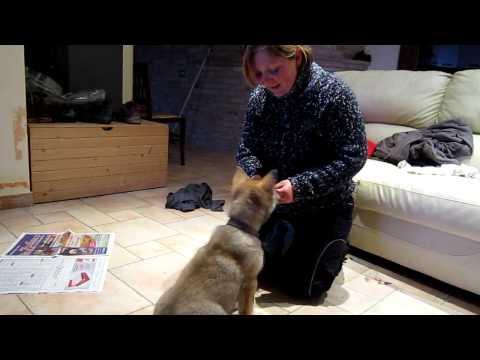 Scuola cinofila con Morena Mancini, consigli per il cucciolo di lupo cecolsovacco