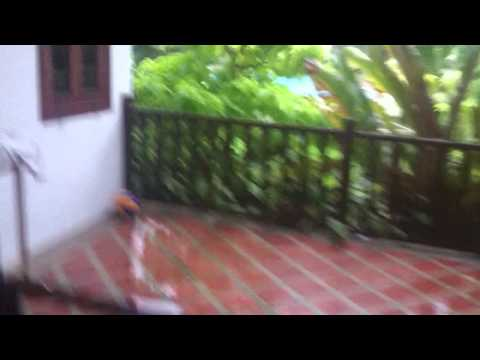 Img 0546 video