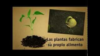 La nutrición de las plantas. La fotosíntesis