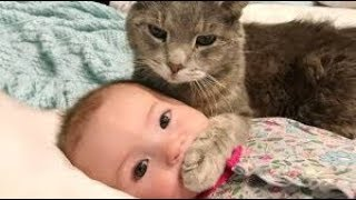 funny baby and cat and fails-funny baby video