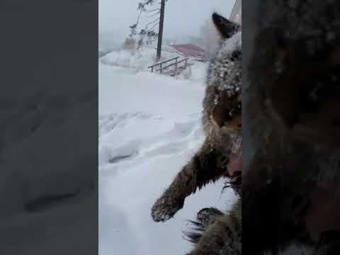 В Усть-Куте школьник спас кошку из ледяного плена