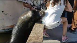 فيديو.. كلب البحر يختطف طفلة ويهرب بها تحت الماء.. شاهد ماذا فعل الأب؟