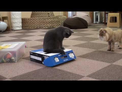 gatos - Gato encierra a gato en una caja de cartón