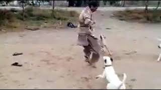 Men vs Dog funny