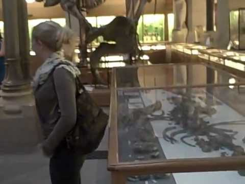 Museums at Night 2012: Inside the Oxford University Museum of Natural History