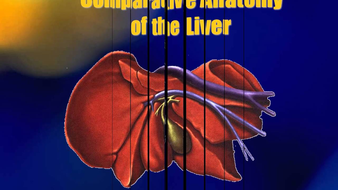 Veterinary comparative anatomy 5589603 - follow4more.info