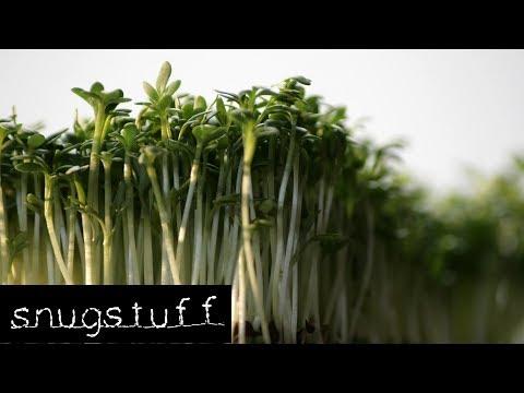 Projekt Kresse - Plantage auf der Fensterbank | Episode 0063