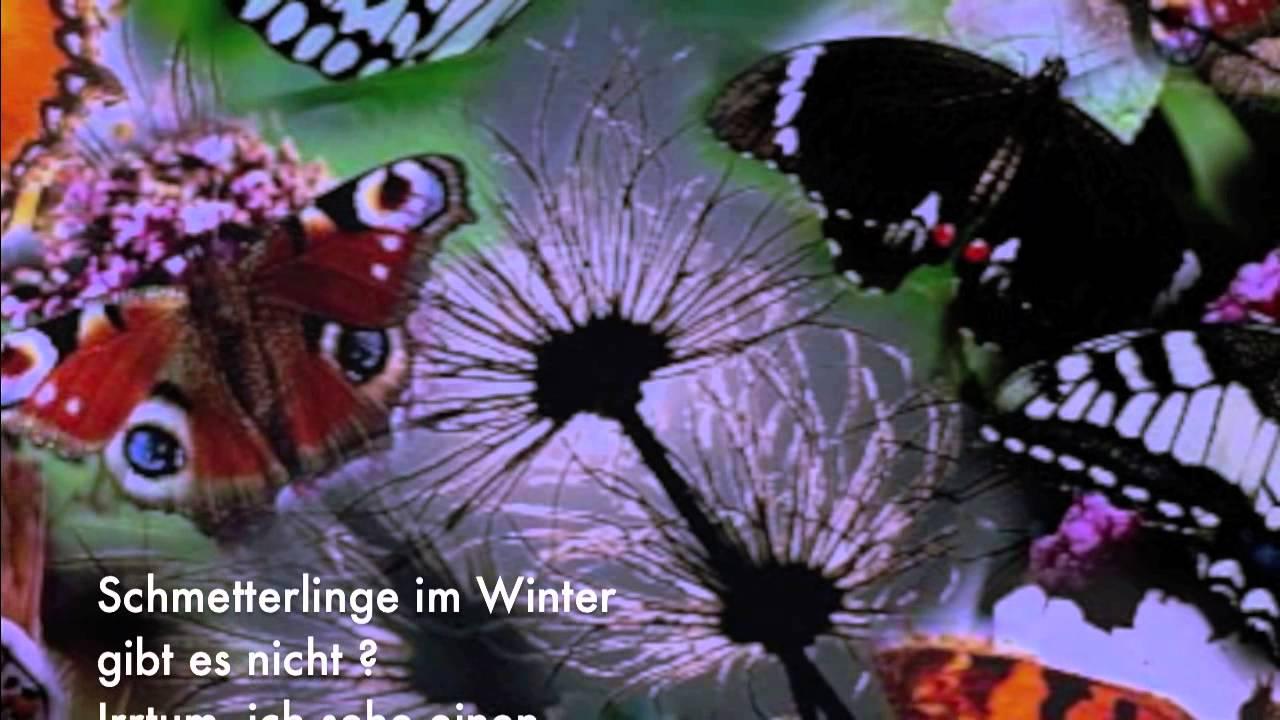 schmetterlinge im winter bernd t pfer gedicht 188 youtube. Black Bedroom Furniture Sets. Home Design Ideas