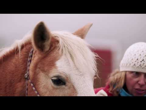 Clydesdales help Purina deliver surprise to horse shelter in need