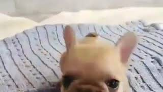 Funny animal videos - I want one