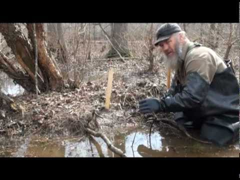 Beaver Trapping with Tom Florin