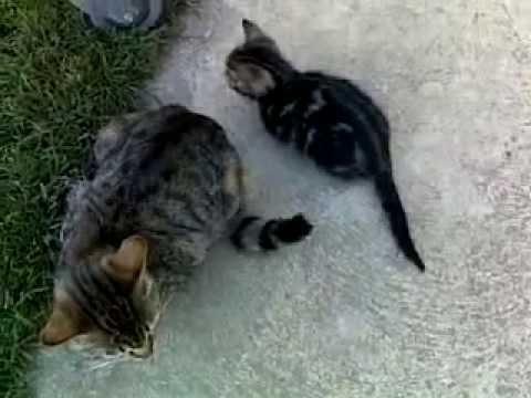 Gatti divertenti (amusing cat )
