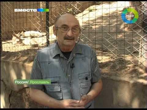 Человек-волк. Эфир 18.11.2012