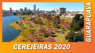 Guarapuava Parque do Lago Cerejeiras  2020