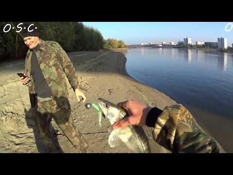 рыбалка в омской области видео 2016