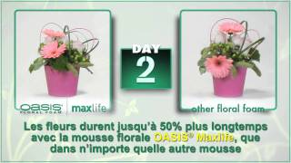 (French Version) Introducing OASIS® Floral Foam Maxlife!