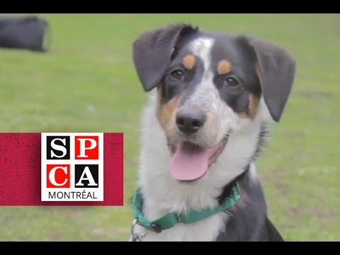 Fidji - SPCA de Montréal