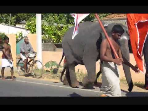 ATHIRADY News -Elephant In Jaffna